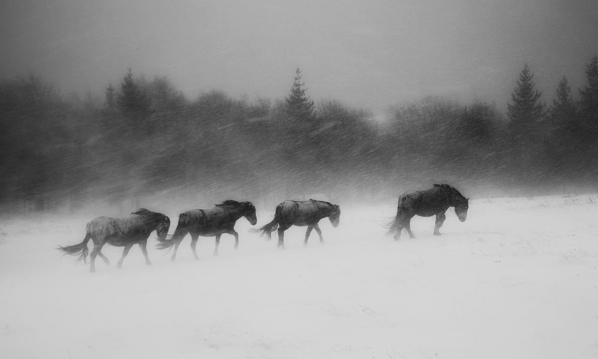 В сърцето на зимата - Виелица   Author Иван Миладинов - Jirko   PHOTO FORUM