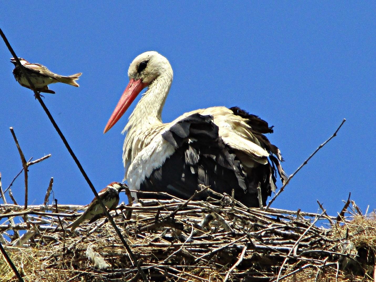 Отново в родното гнездо