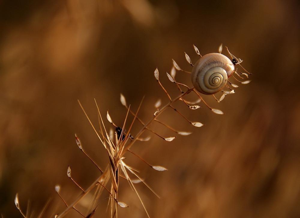 Тръненият път към Вечността... | Author Alein  - Alein | PHOTO FORUM