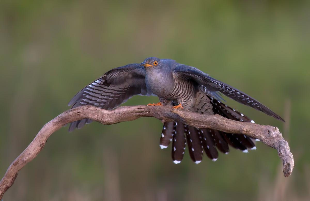 Photo in Wild life | Author diskusa | PHOTO FORUM