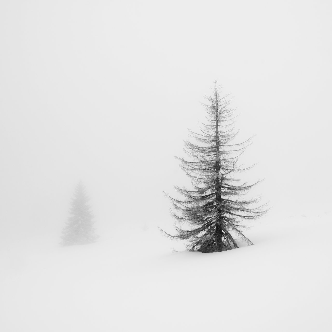 Витоша 1/2 | Author Emil Rashkovski - brutas | PHOTO FORUM