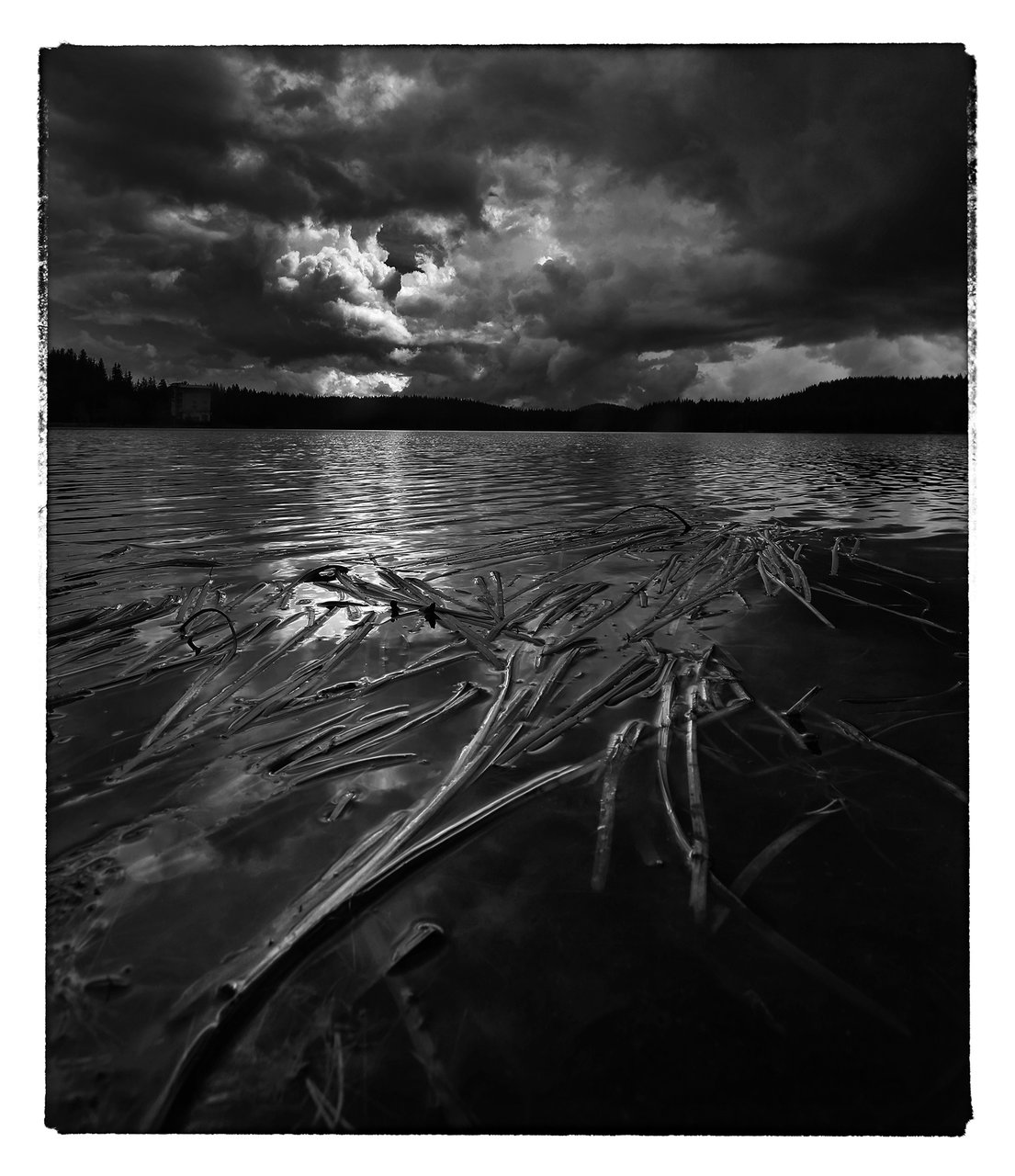 Photo in Nature | Author Milan Hristev - MAX-1 | PHOTO FORUM