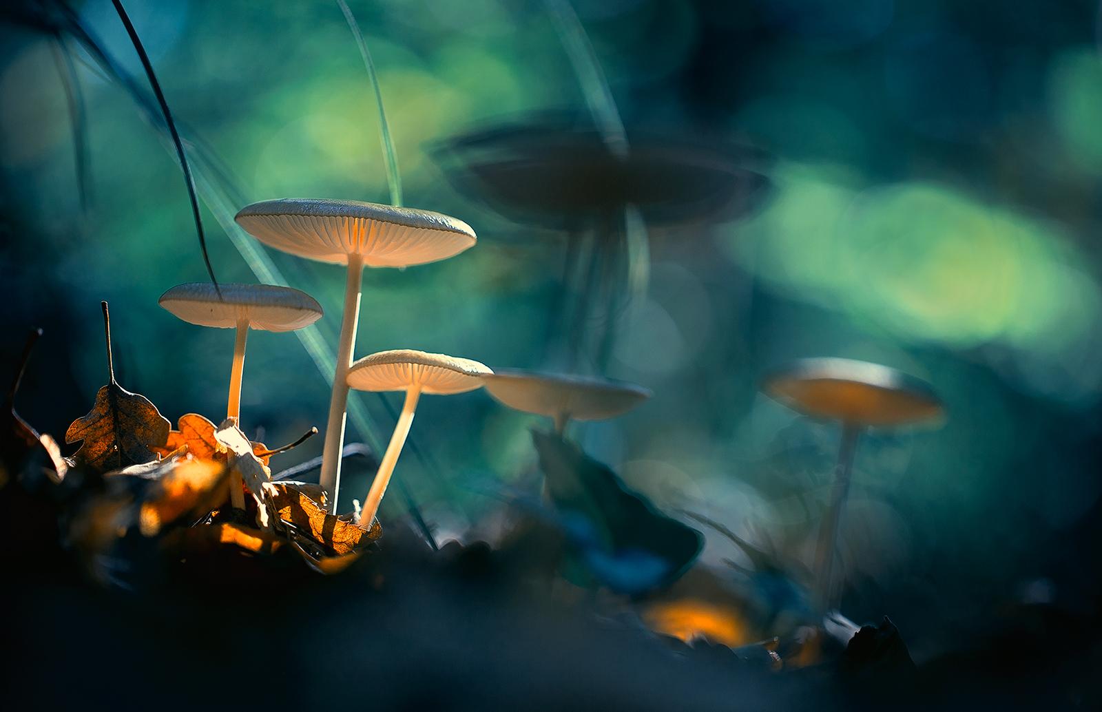 Photo in Nature   Author Георги Георгиев - zeromx   PHOTO FORUM