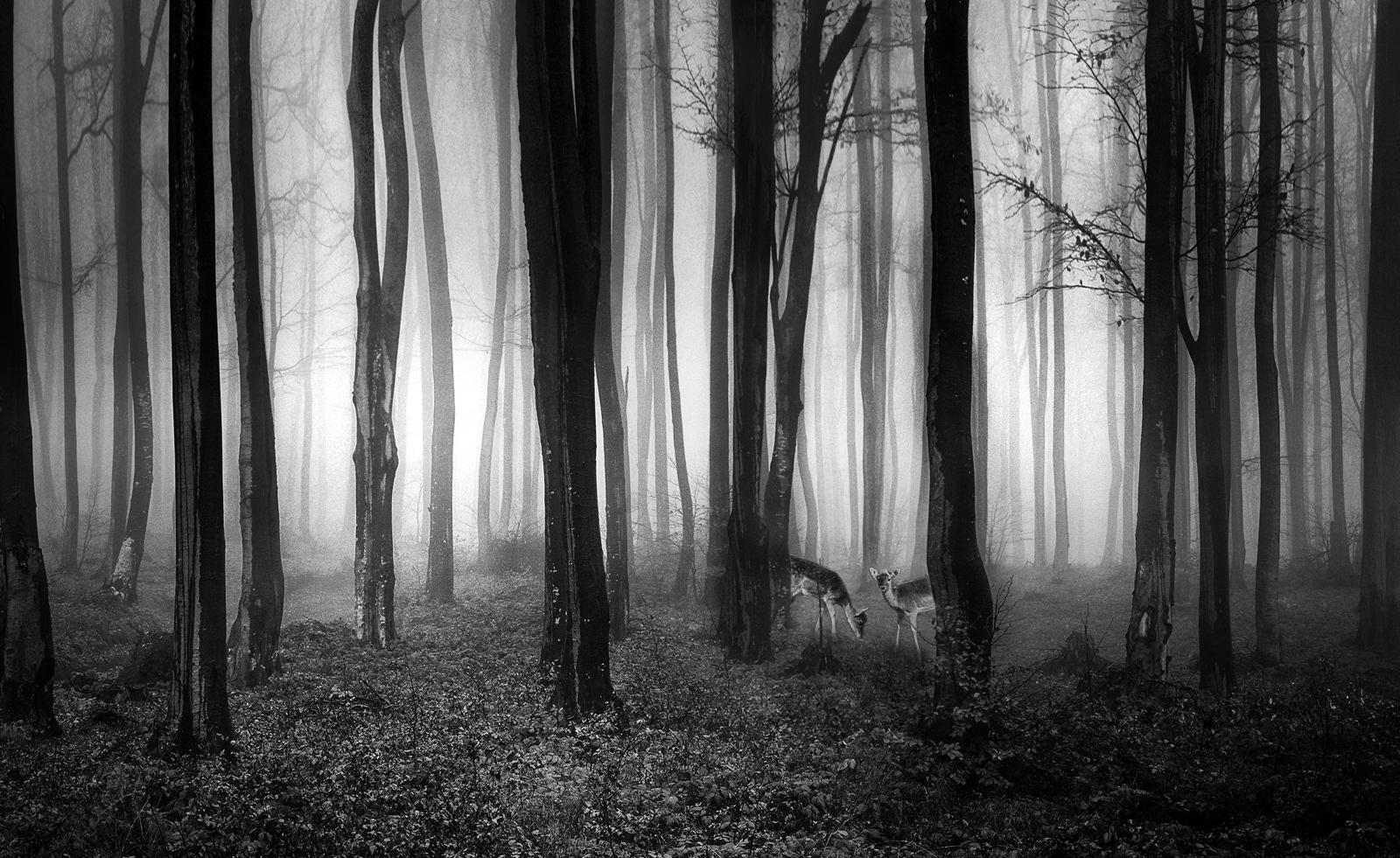 Photo in Nature | Author Илина Танева - Инка | PHOTO FORUM