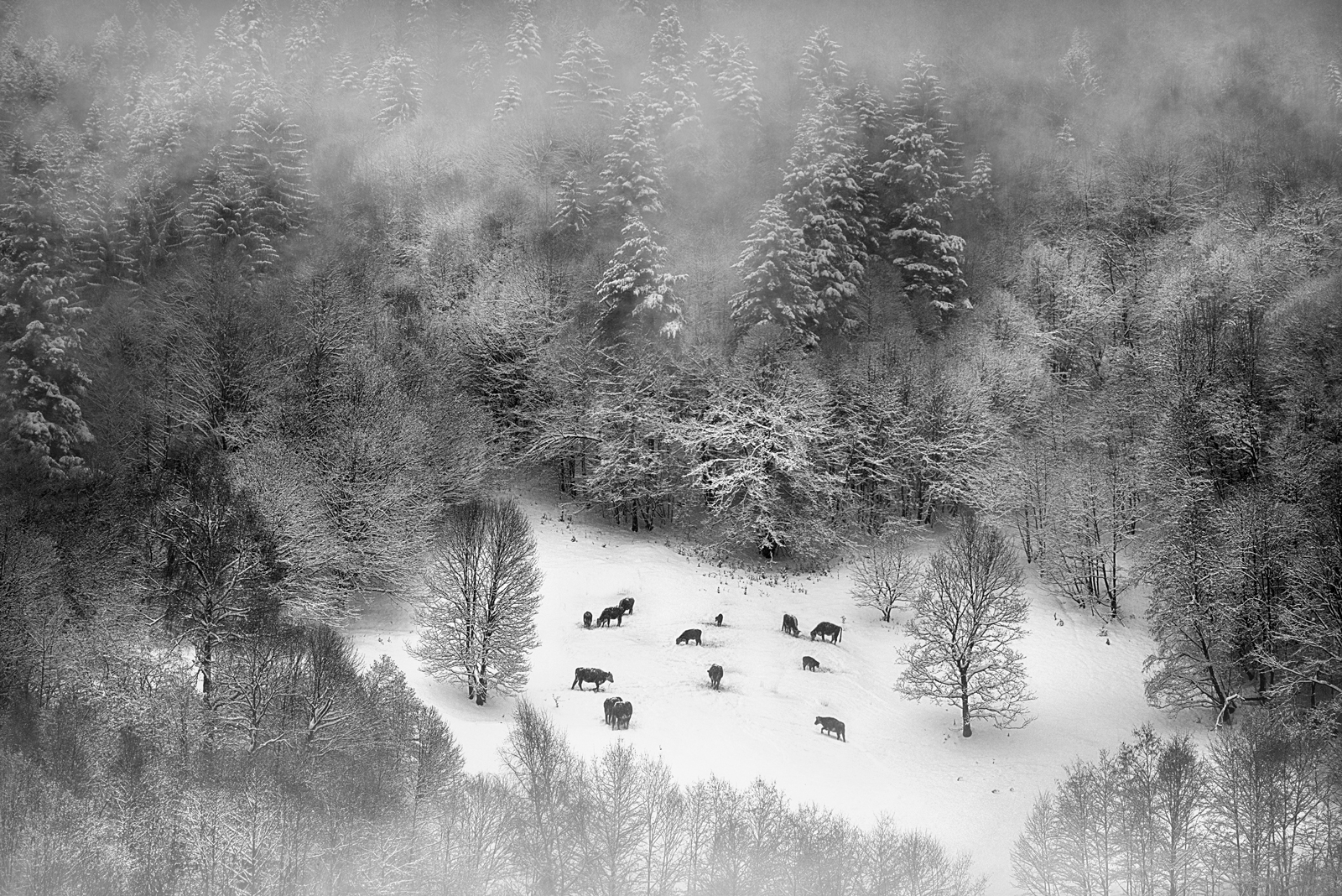 Photo in Nature | Author Todor Tanev - Todor_Tanev | PHOTO FORUM