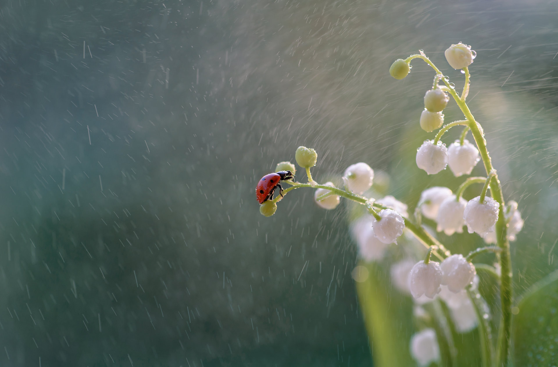 Photo in Macro | Author Tanq Markova - Nyamarkova | PHOTO FORUM