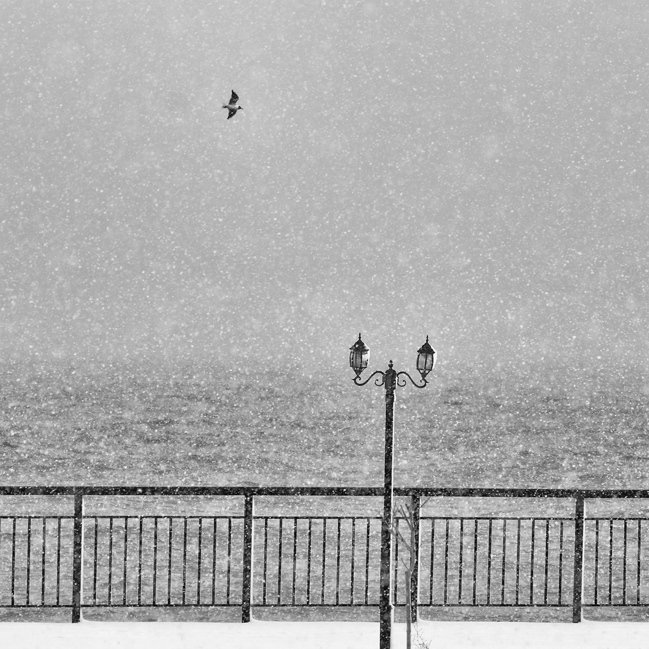 Photo in Nature | Author Mladen Parvanov - demiman | PHOTO FORUM