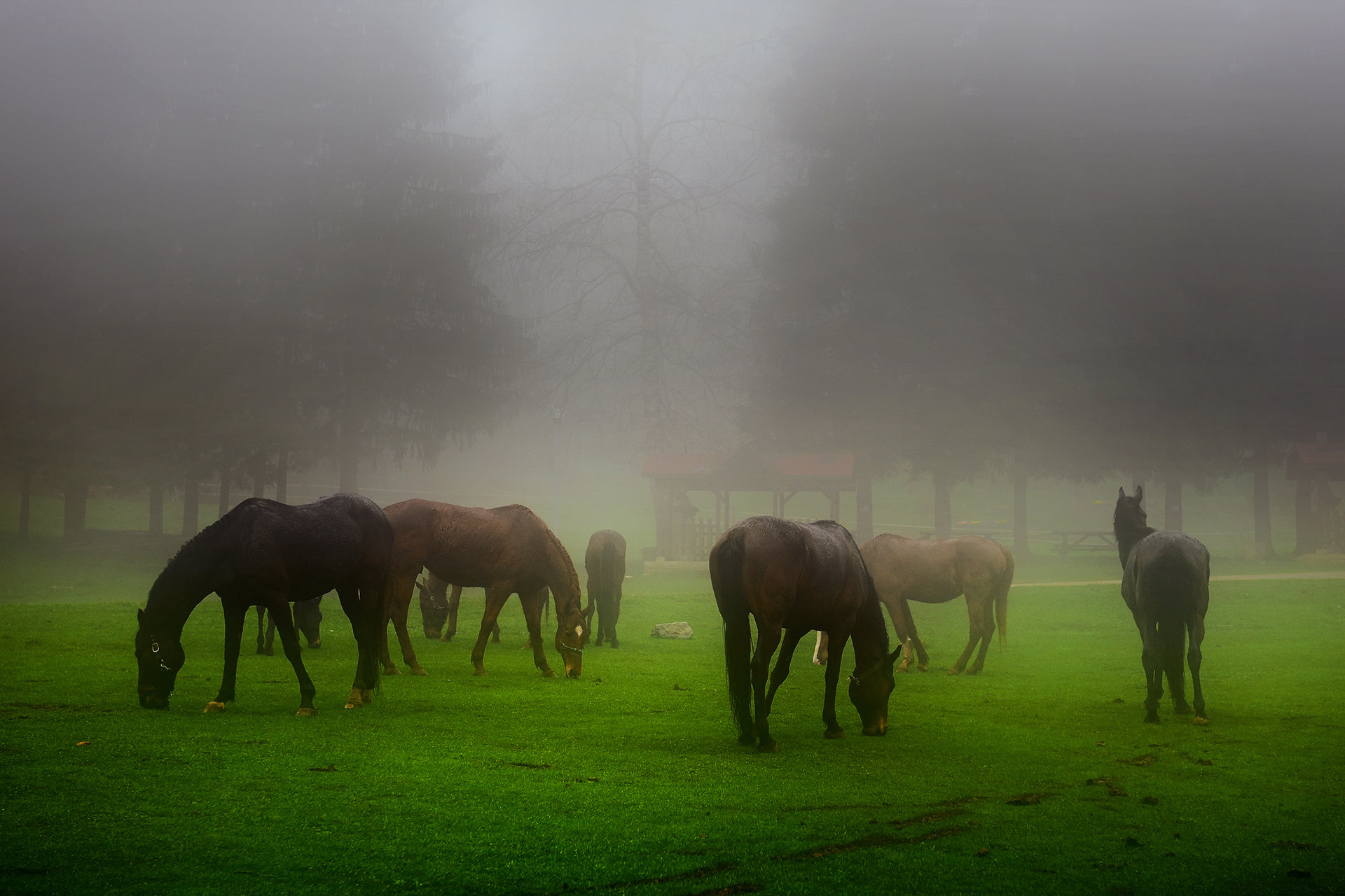 На паша в мъглата | Author Lyubomir Vitkov - goldylux | PHOTO FORUM