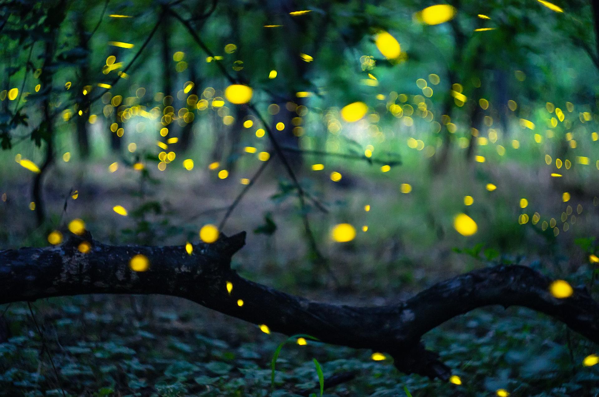 Светулките | Author Kostadin Madzharov - _koko_ | PHOTO FORUM