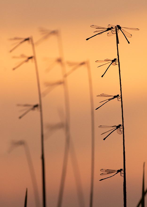 Photo in Nature   Author Histo Peshev - mardraum   PHOTO FORUM