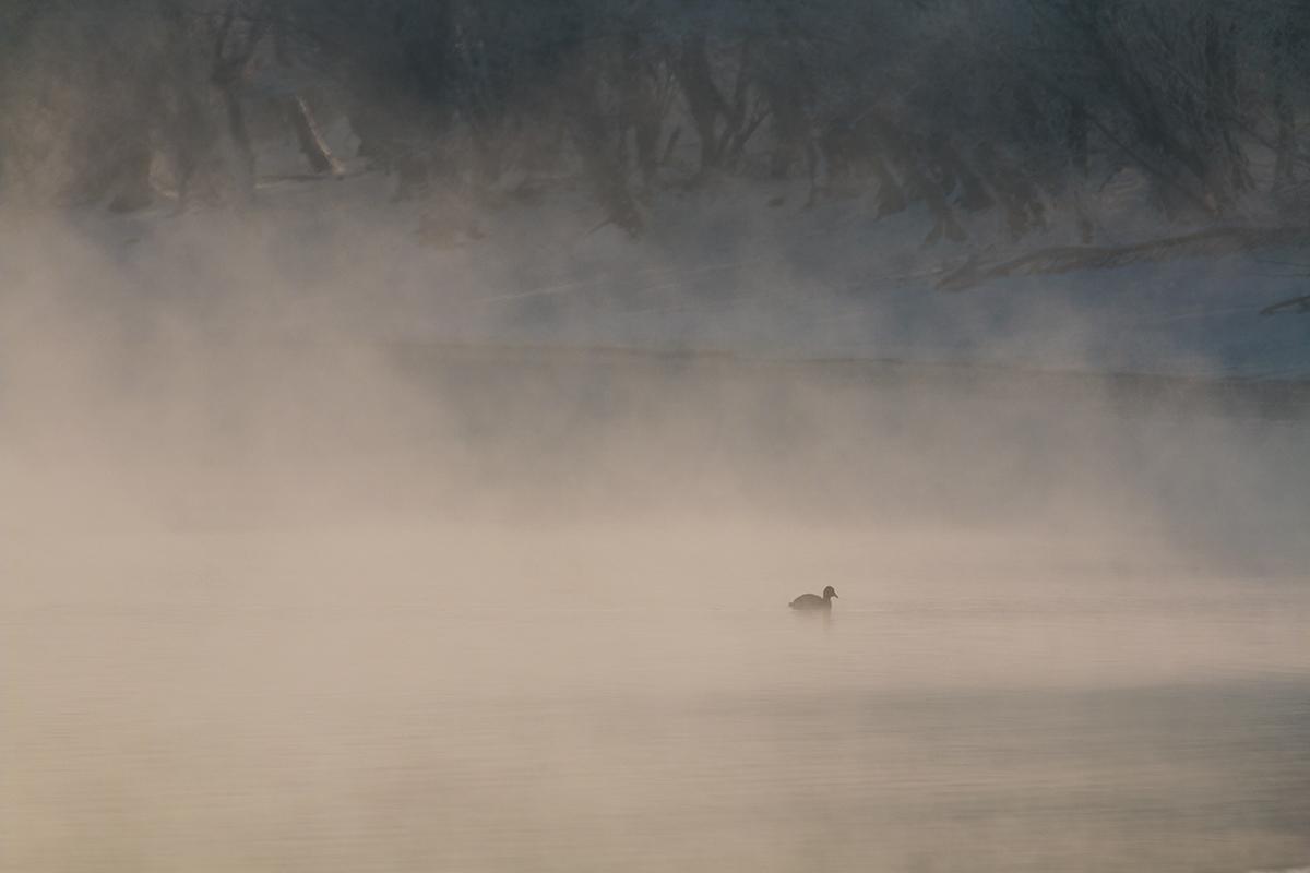 Photo in Nature | Author ivaylo ivanov - iffo | PHOTO FORUM