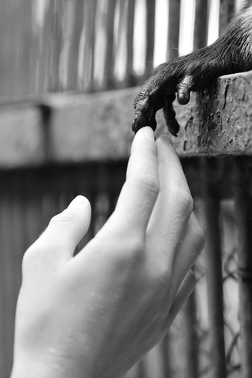 Photo in Everything else | Author Катрин Суролейска - katrinsuro | PHOTO FORUM