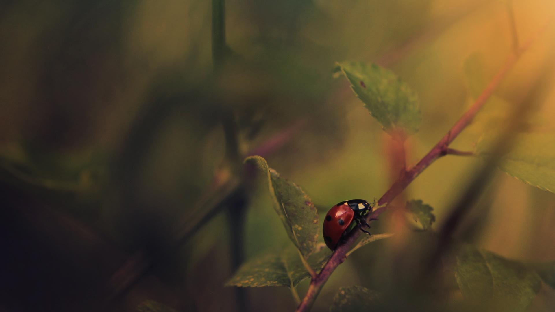Светлината към живота   Author Miroslav Georgiev - M.Georgiev   PHOTO FORUM