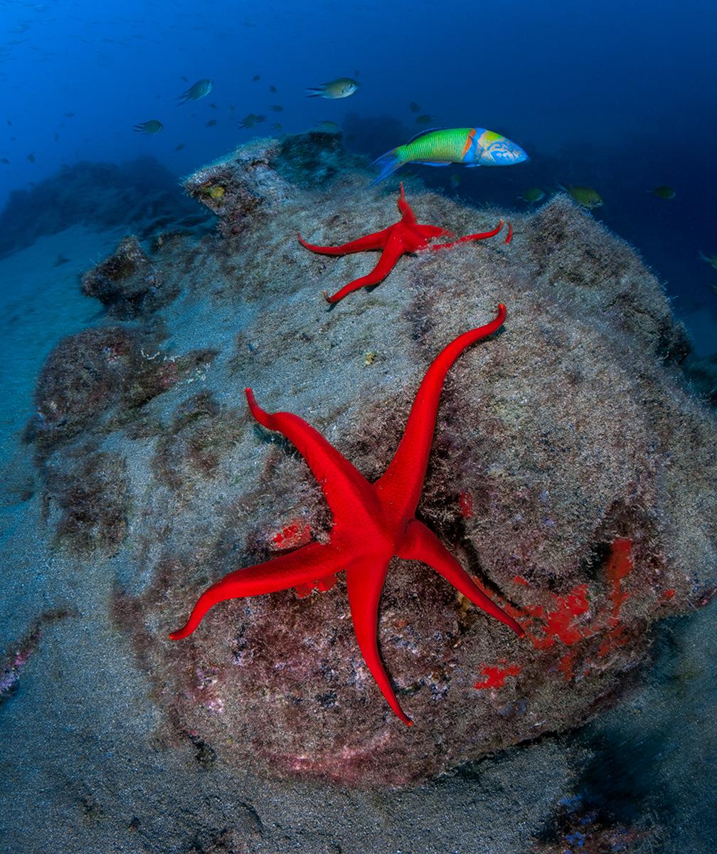 Подводен пейзаж | Author Atanas Petrov - scuba_d | PHOTO FORUM