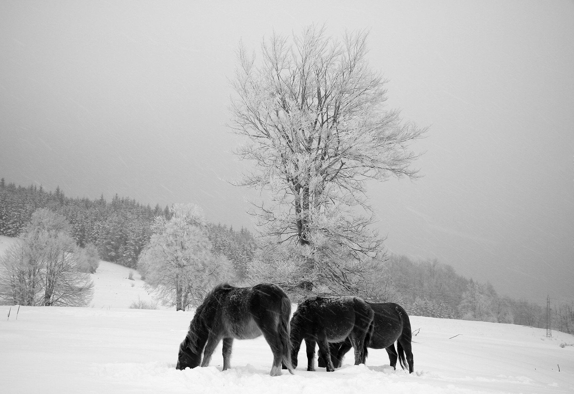 ,,Frozen''(,,Замръзнали'') от емилиян евдокимов - evdokimov_emo