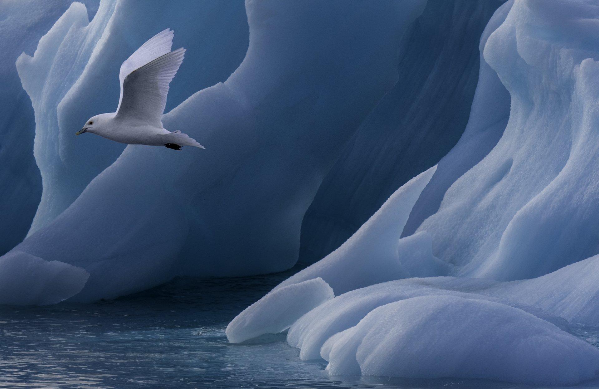 Frozen Beauty | Author Жоро  - HITTHEROAD | PHOTO FORUM