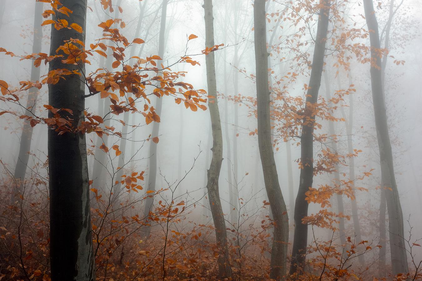 Photo in Nature | Author Svetlozar Asparuhov - exobexo | PHOTO FORUM
