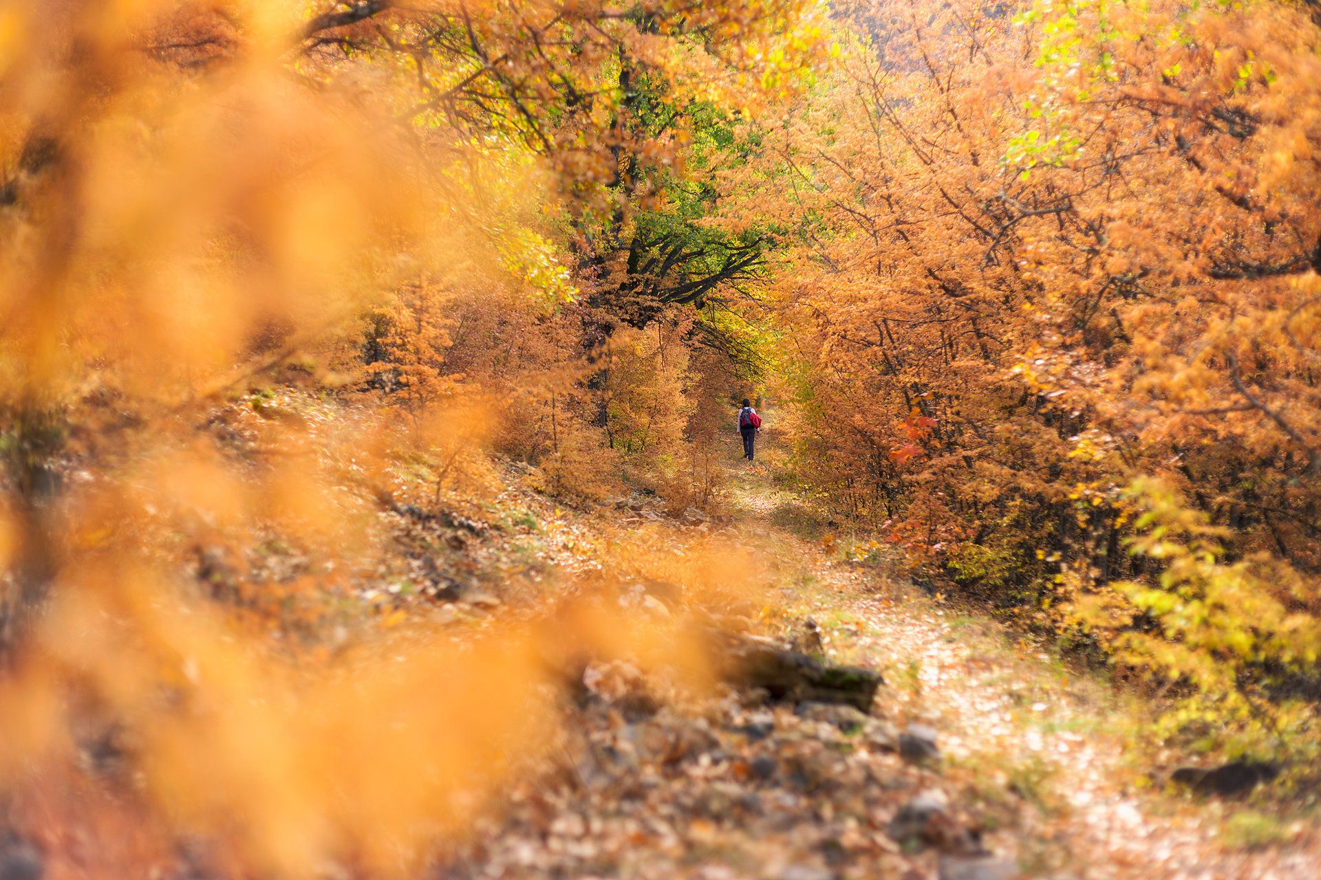 През тунела на дните от есента на мечтите | Author Tyuncher Eminov - tyunkata | PHOTO FORUM