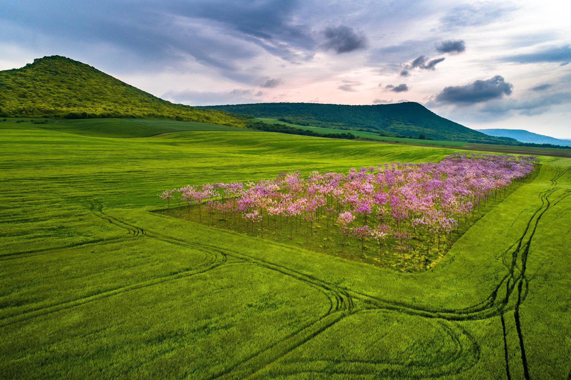 Цветна градина от Захари Минчев - Zaxo