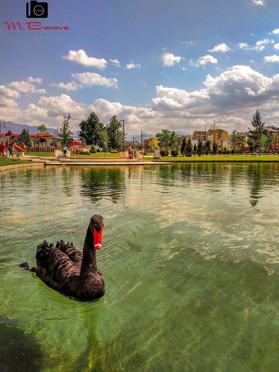 Лебеди от МАРЧЕЛА БАРОВА - mar4