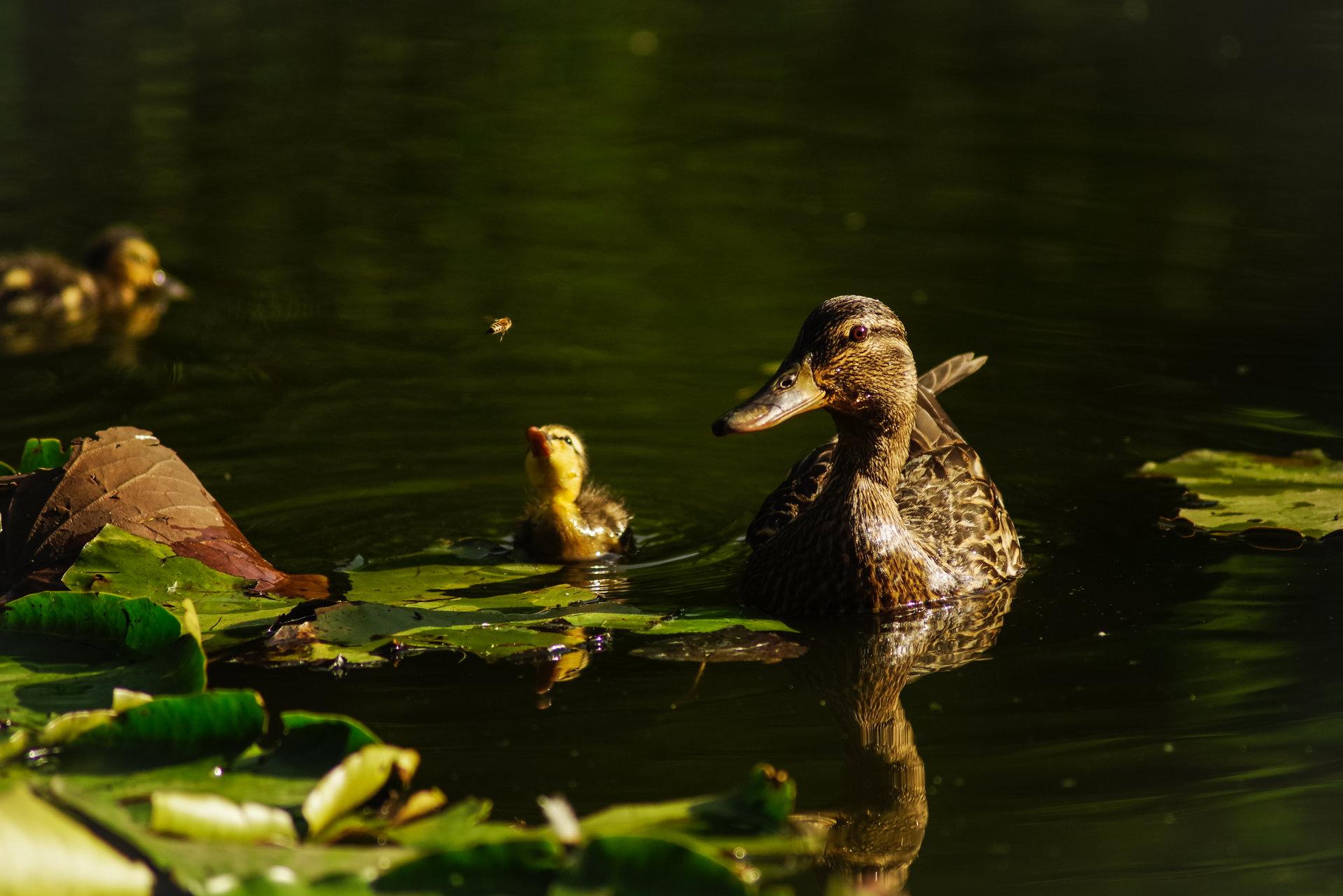 Photo in Nature | Author krishna1 | PHOTO FORUM