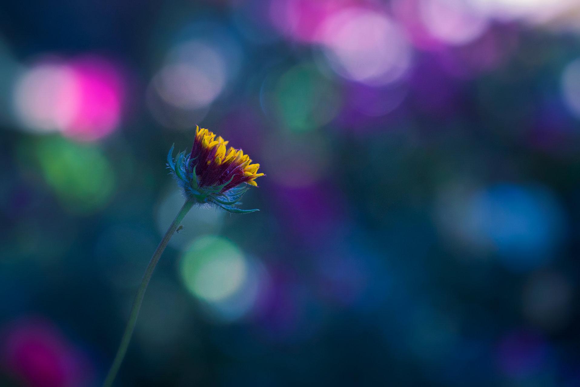 цветно.. | Author Христина Видева - burberry | PHOTO FORUM