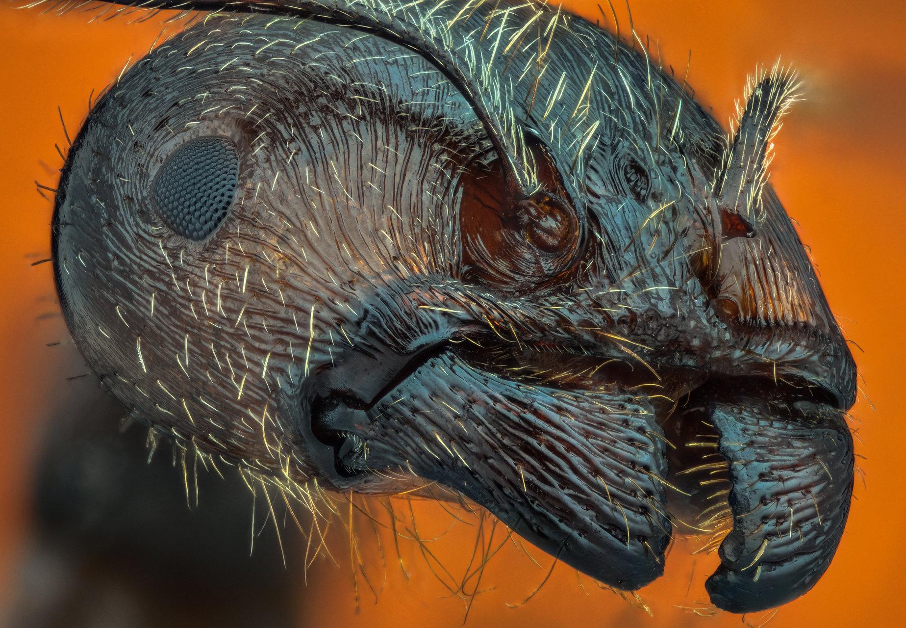 Мравка от Цветан Ганев - ceclii