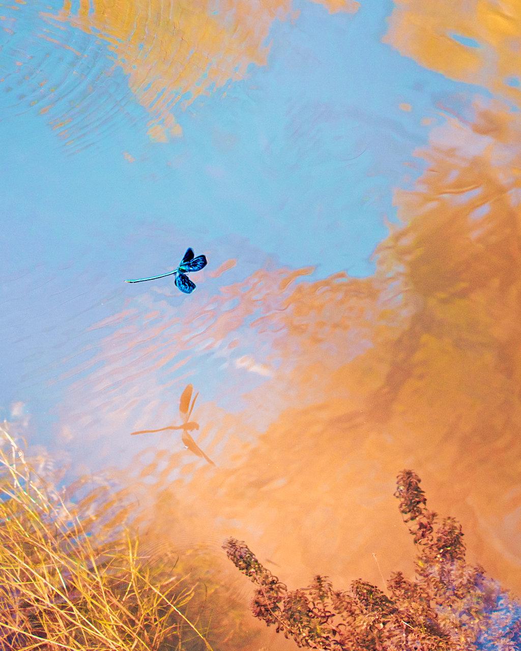 Тайният живот на водните кончета | Author Виктория Стоянова - Vanguard | PHOTO FORUM
