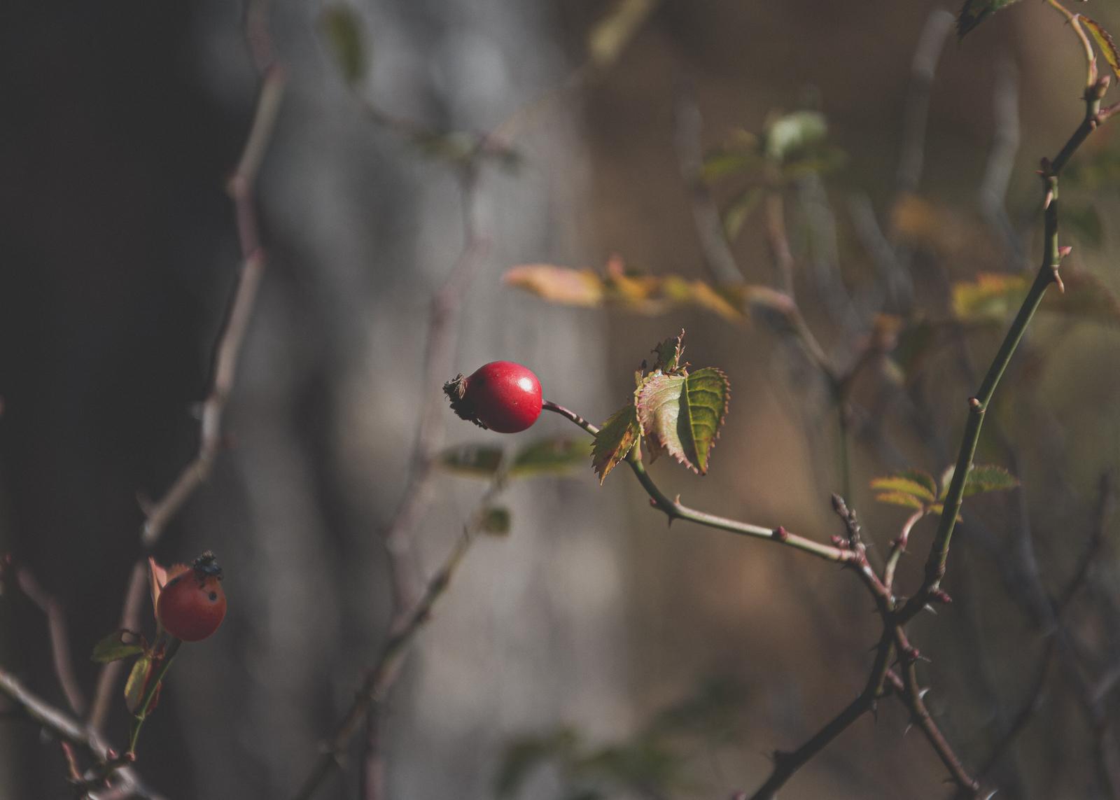 Есен от Борис Бицин - insanefen1