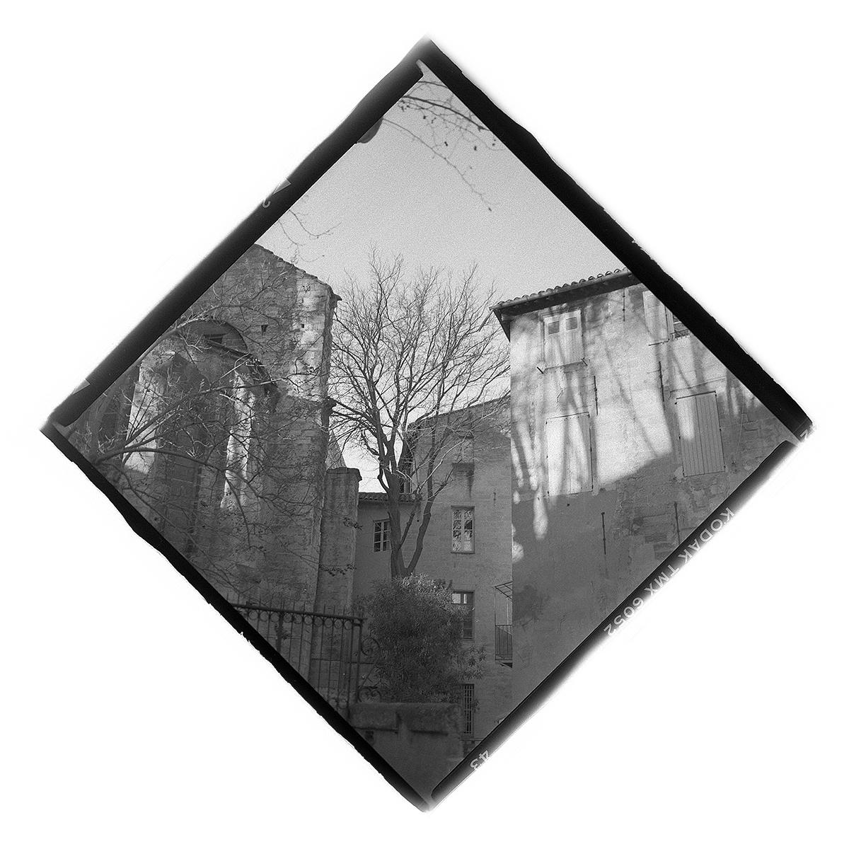 Tree In Avignon от Завист - Завистта