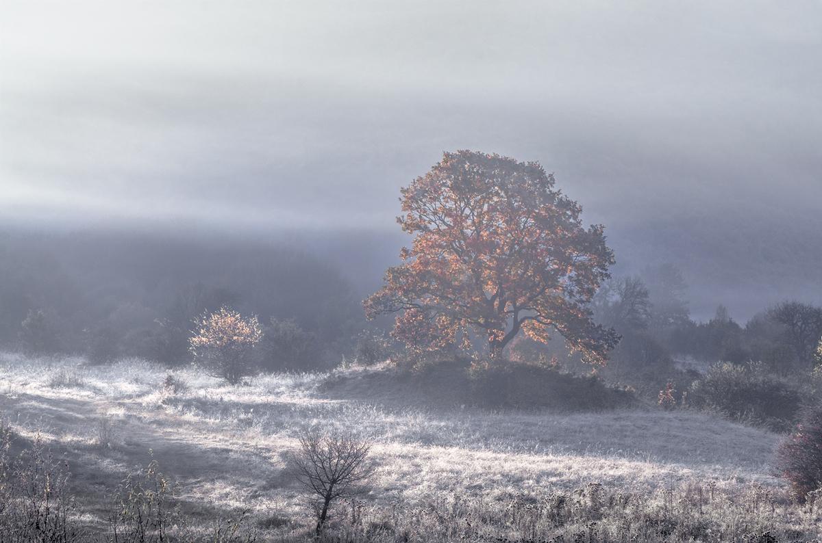 С дъх на зима | Author sandart | PHOTO FORUM