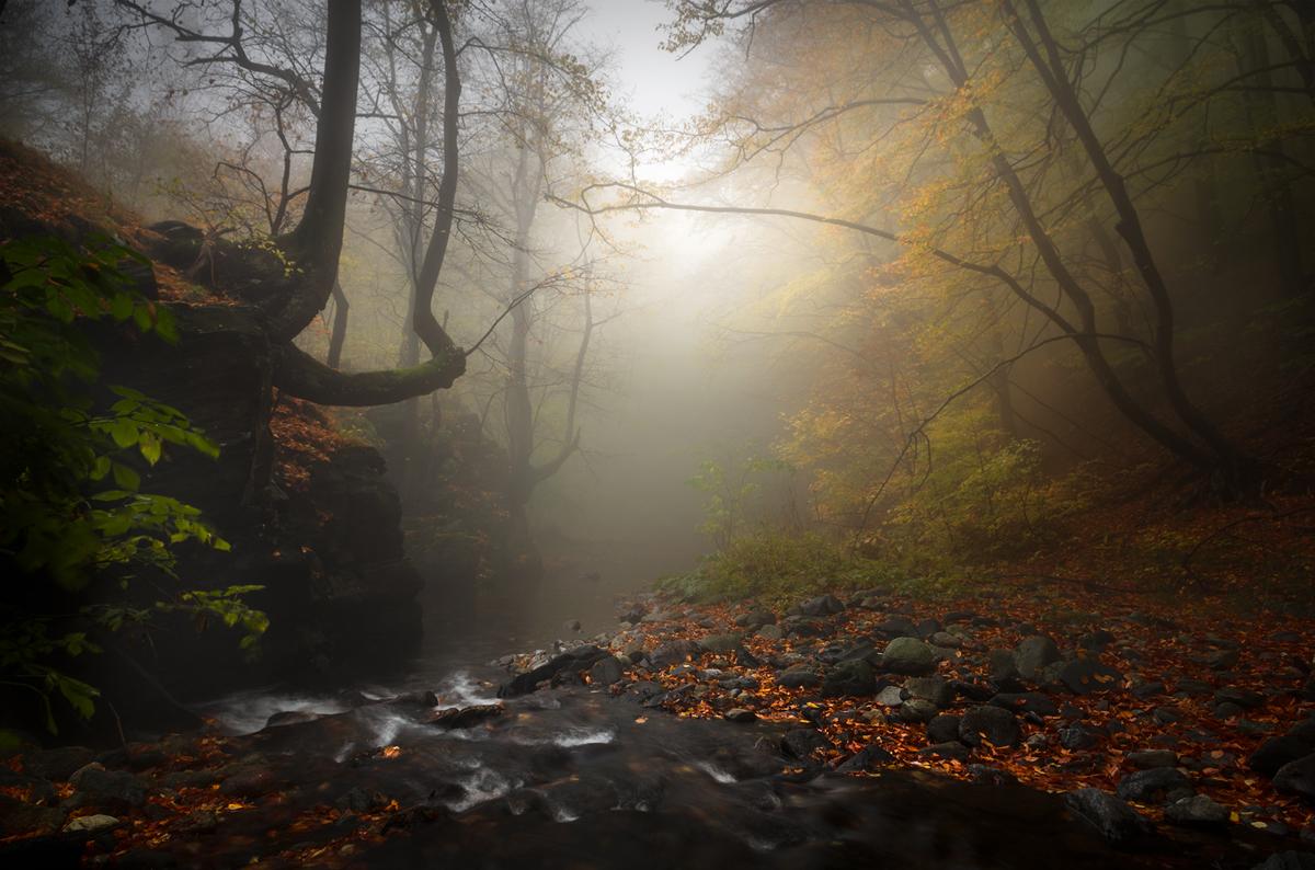 Подари ми есен | Author Alexander Alexandrov - sandart | PHOTO FORUM