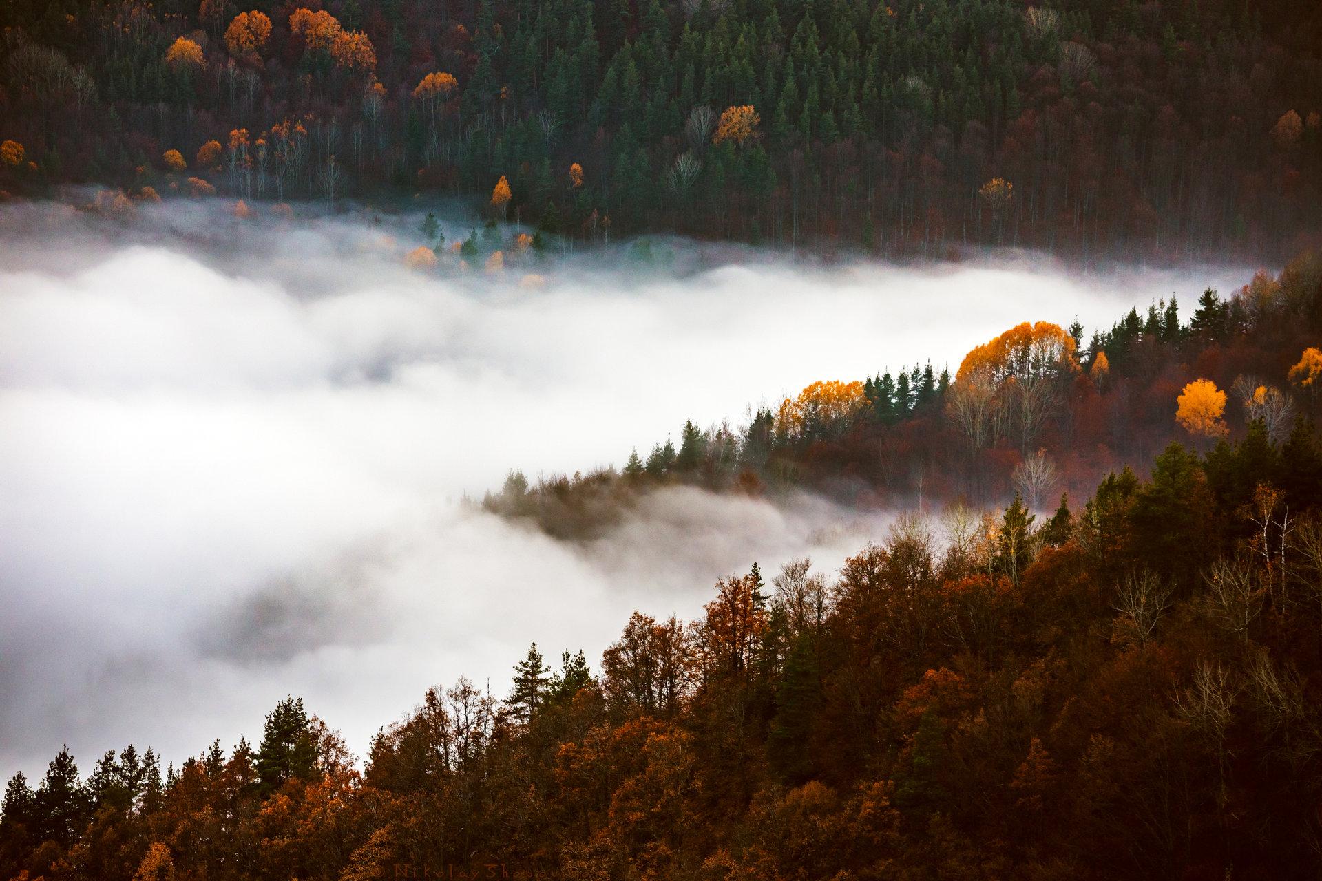Есен от Nikolay Shopov - Shopov86