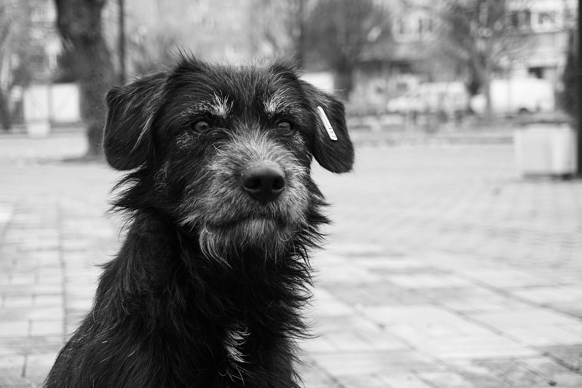 Очите говорят   Author Bozhidar  Genkov - CaptureTheMoment   PHOTO FORUM