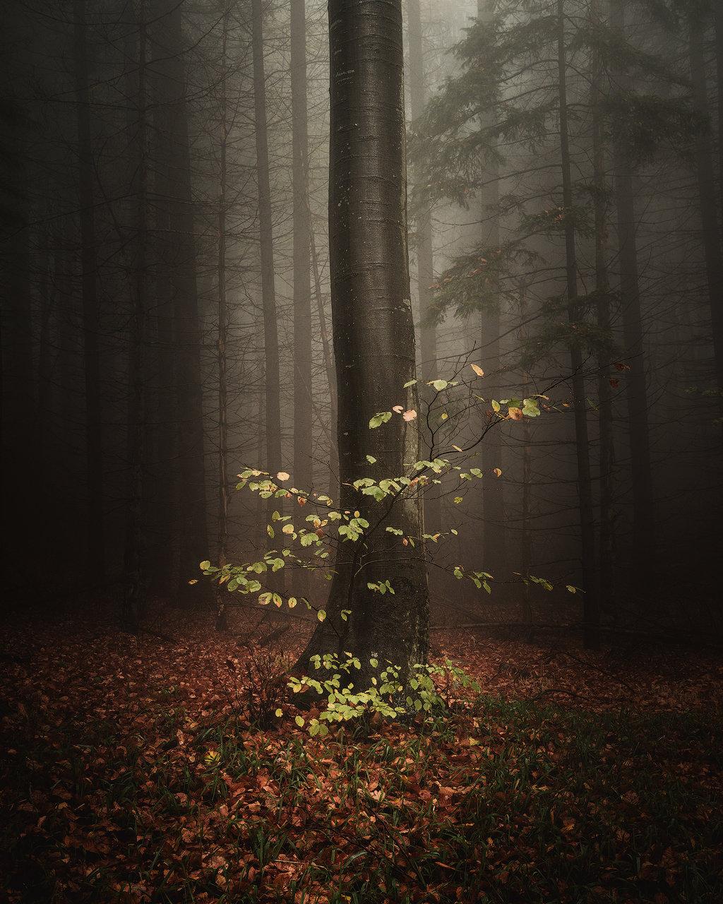 Photo in Nature | Author Remo Daut - wallburn | PHOTO FORUM
