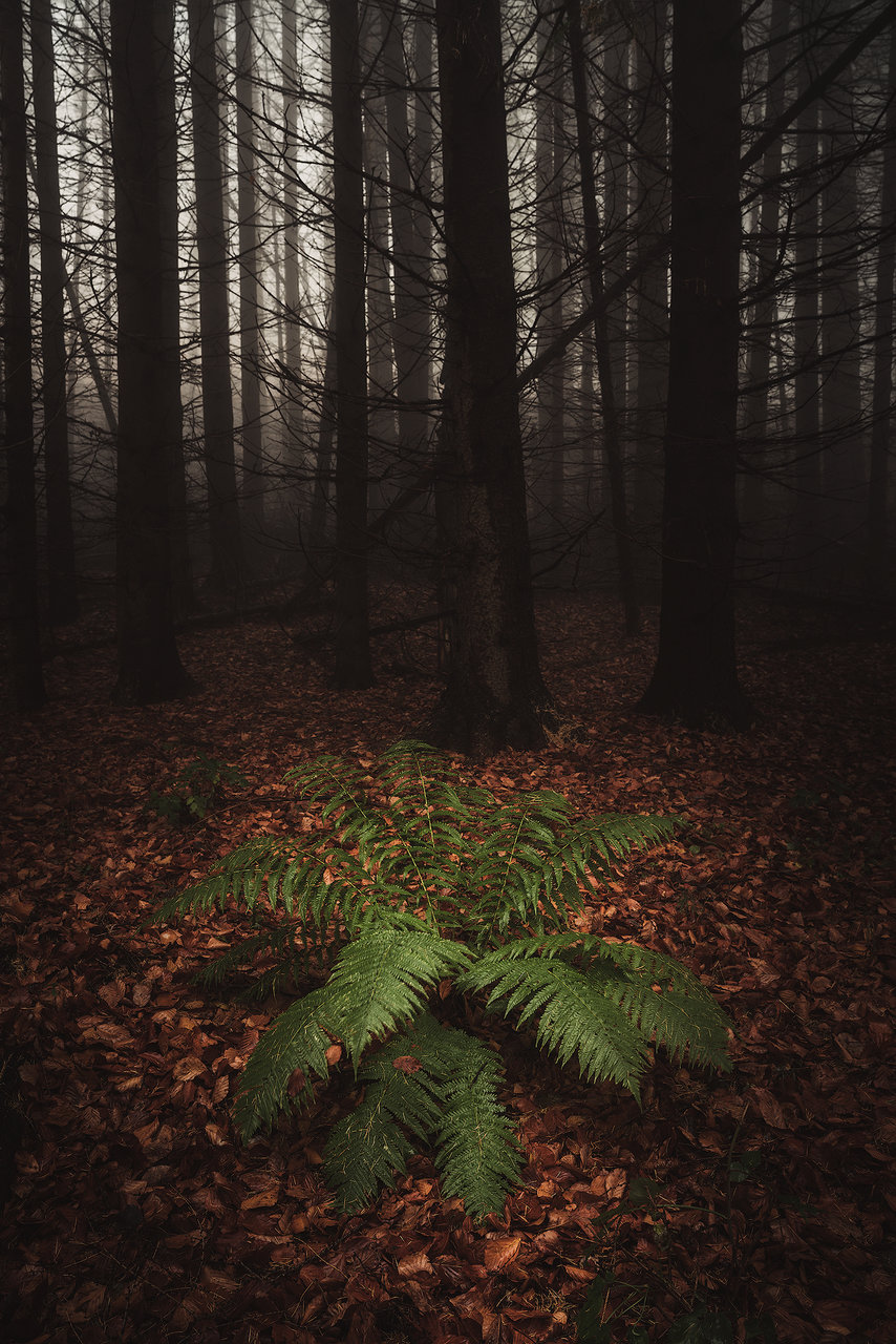 Photo in Landscape | Author Remo Daut - wallburn | PHOTO FORUM