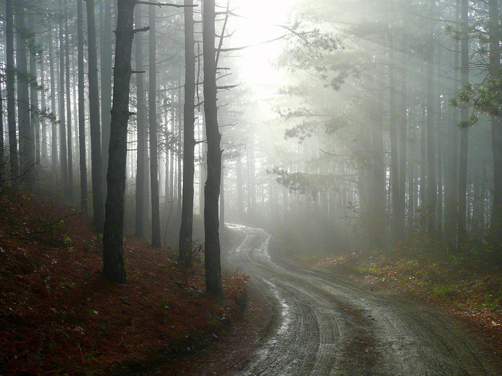 Мъглива есен   Author MartoH  - MartoH   PHOTO FORUM
