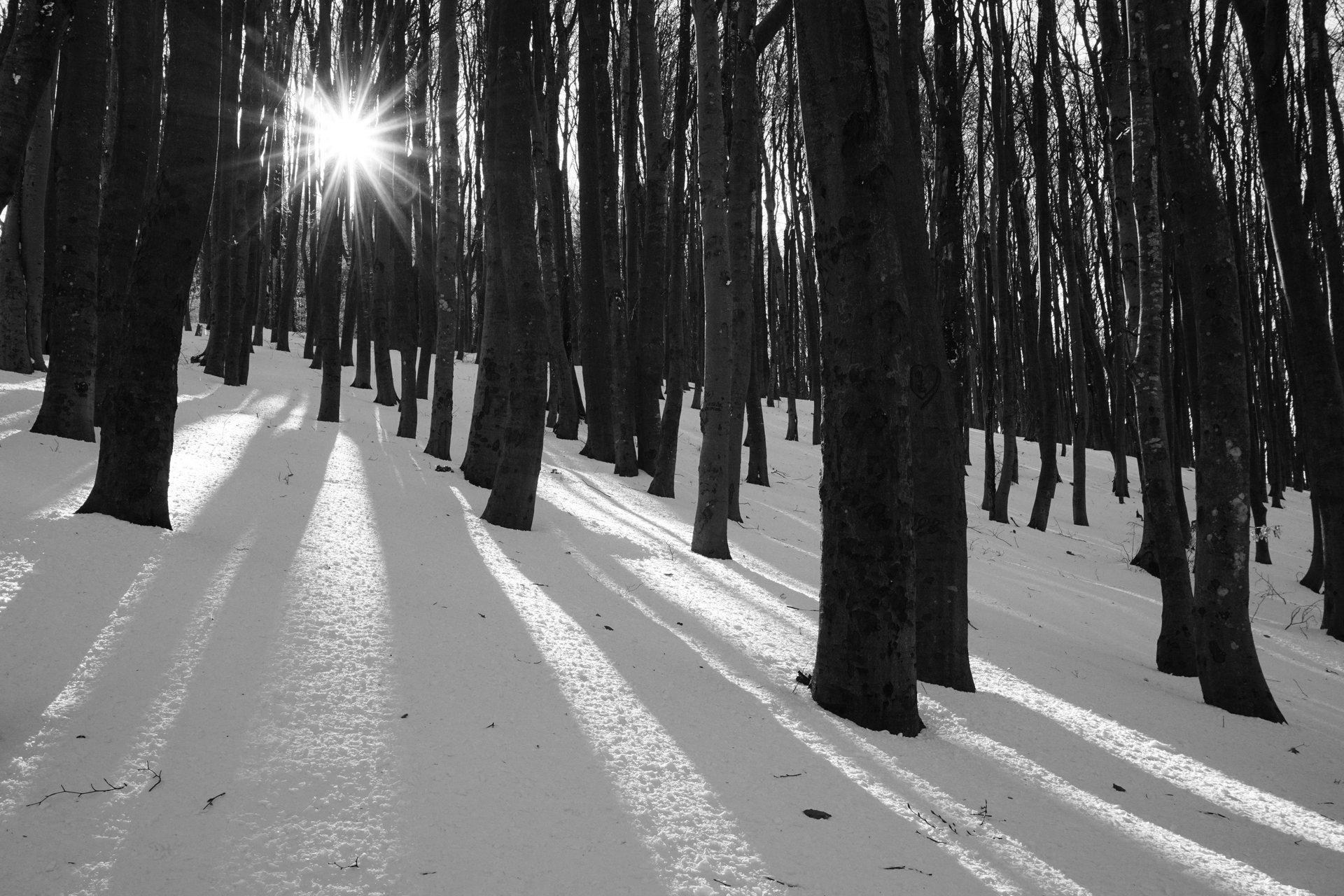 Зимен лъч светлина | Author Bozhidar  Genkov - CaptureTheMoment | PHOTO FORUM