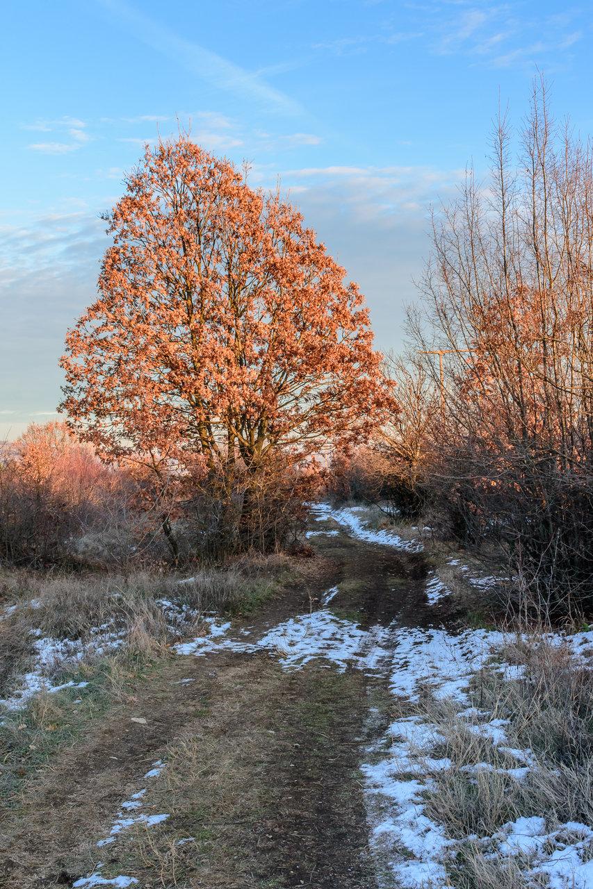 зимна разходка от Milen Mladenov - resco