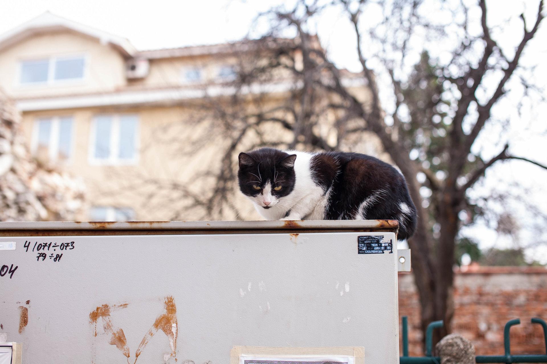 Photo in Street   Author Красимир Евслогиев - kpanci   PHOTO FORUM