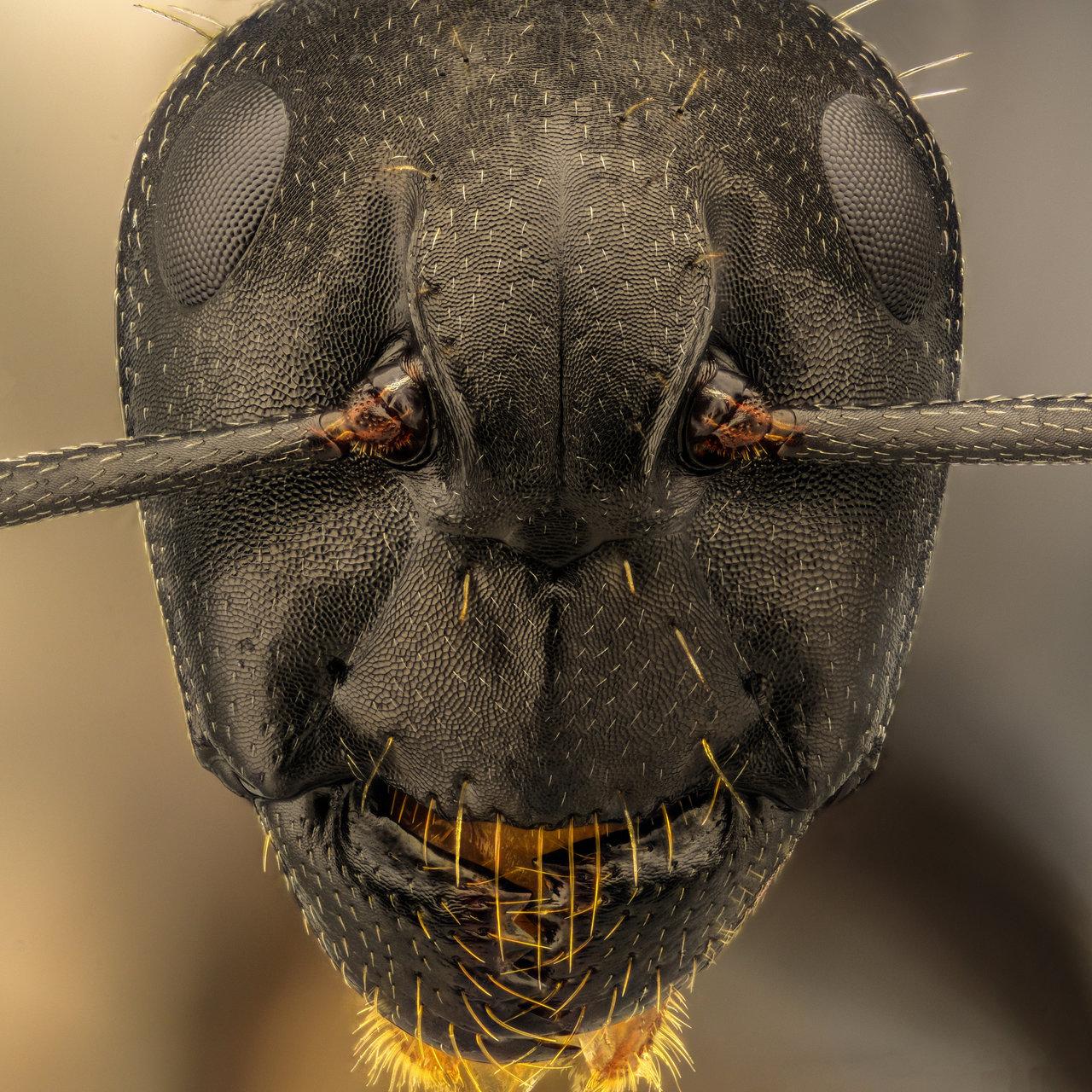 Мравка от Tsvetan Ganev - ceclii
