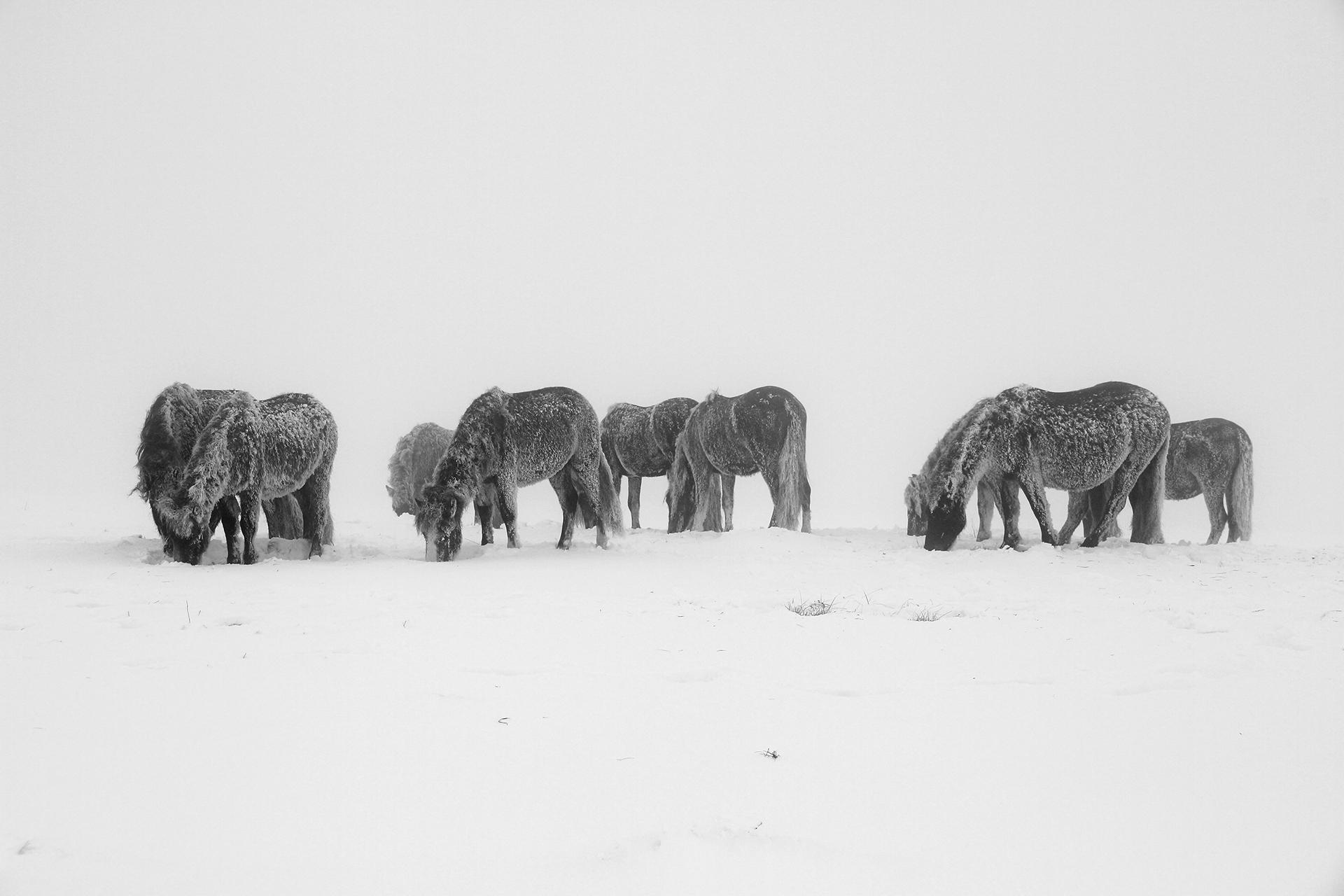 ''Замръзнали''   Author Emiliyan  Evdokimov - evdokimov_emo   PHOTO FORUM