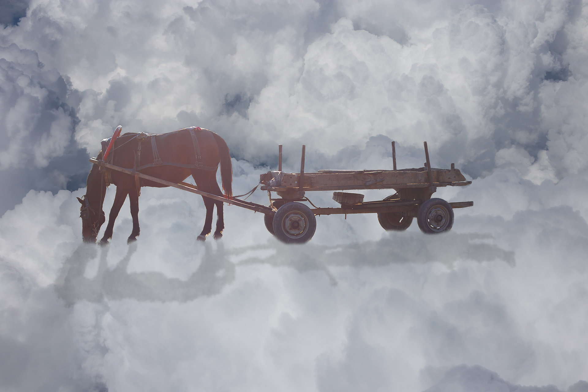 Не ги убиват уморените коне от Станка - Бяла_гарга