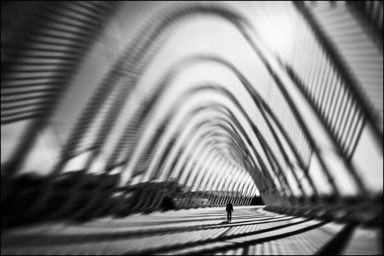 ~ Striped Existence ~ | Author Yancho Sabev - yanee | PHOTO FORUM