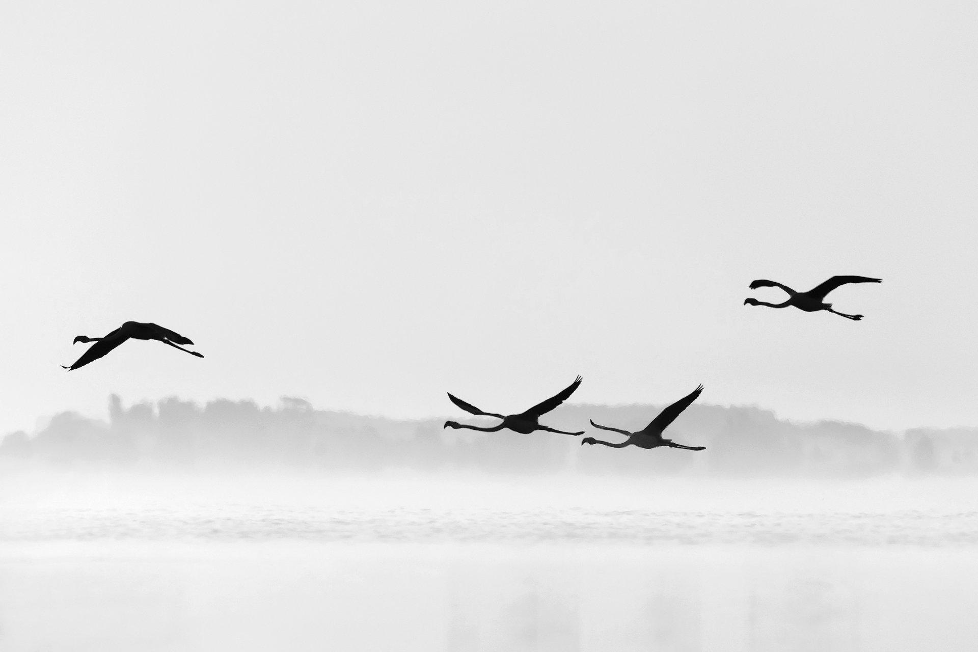 Хармония   Author Dragomir Georgiev - Dragon_bird   PHOTO FORUM