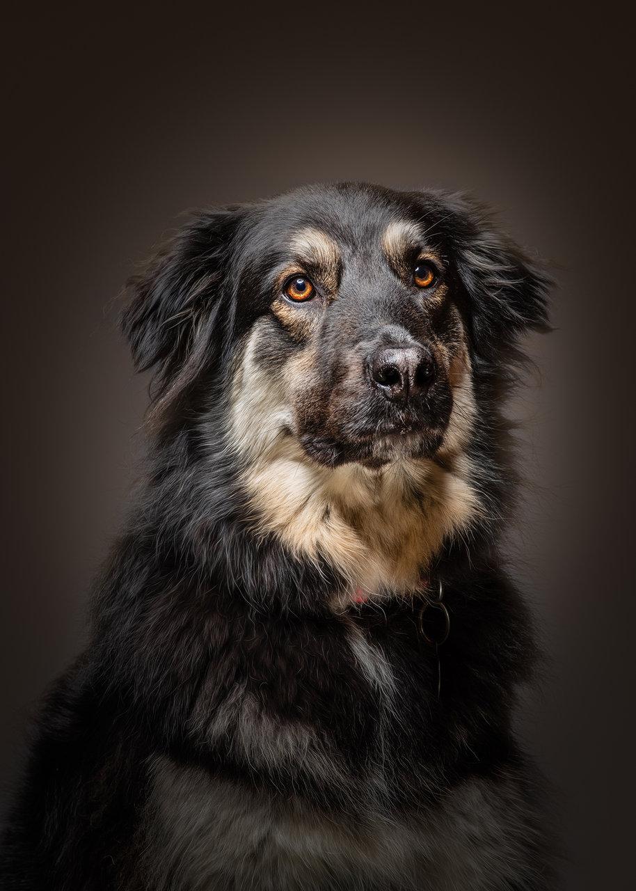 Photo in Portrait | Author stoyo | PHOTO FORUM