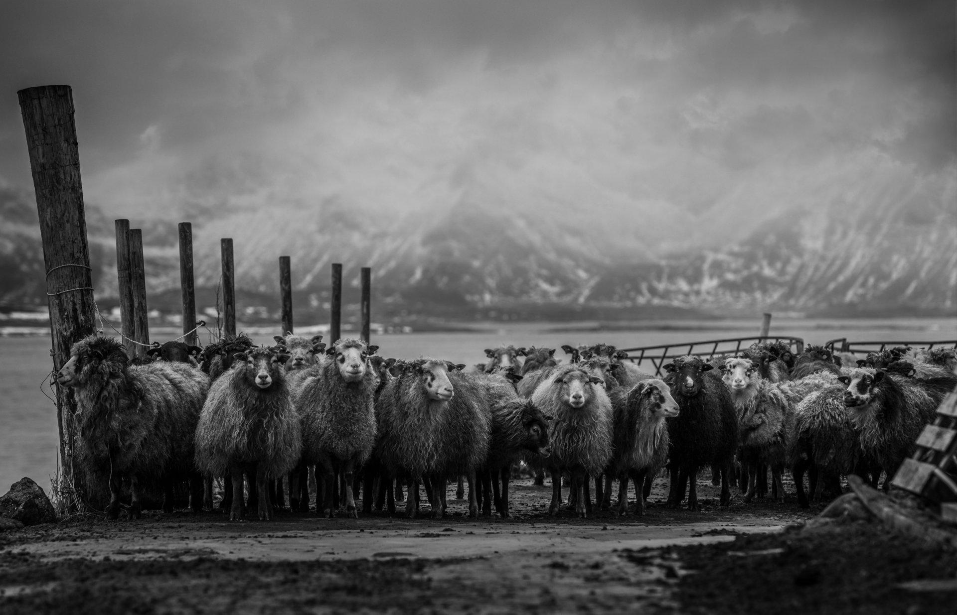 Жители на севера | Author Vladimir Karamazov - Vlado79 | PHOTO FORUM