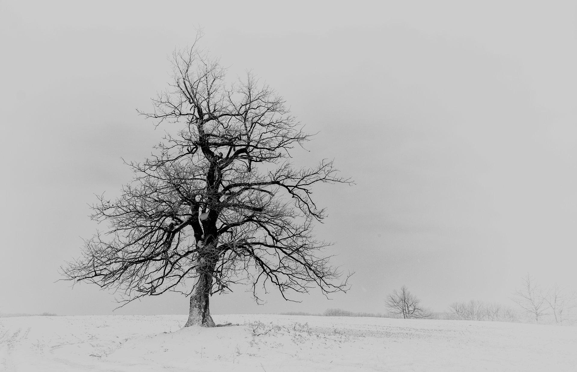 Photo in Minimalistic | Author Nikolaj Dobrev - N.Dobrev | PHOTO FORUM
