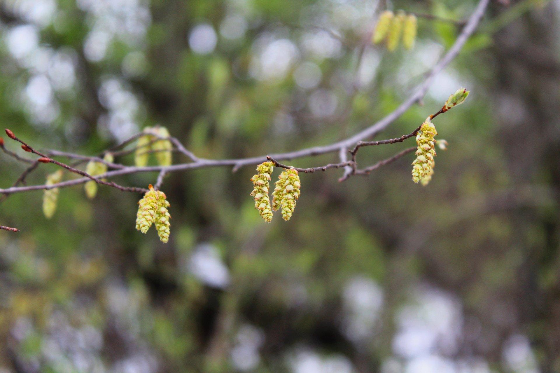 а пролетта не чака | Author Kamelia Rangelova - RangelovaK | PHOTO FORUM