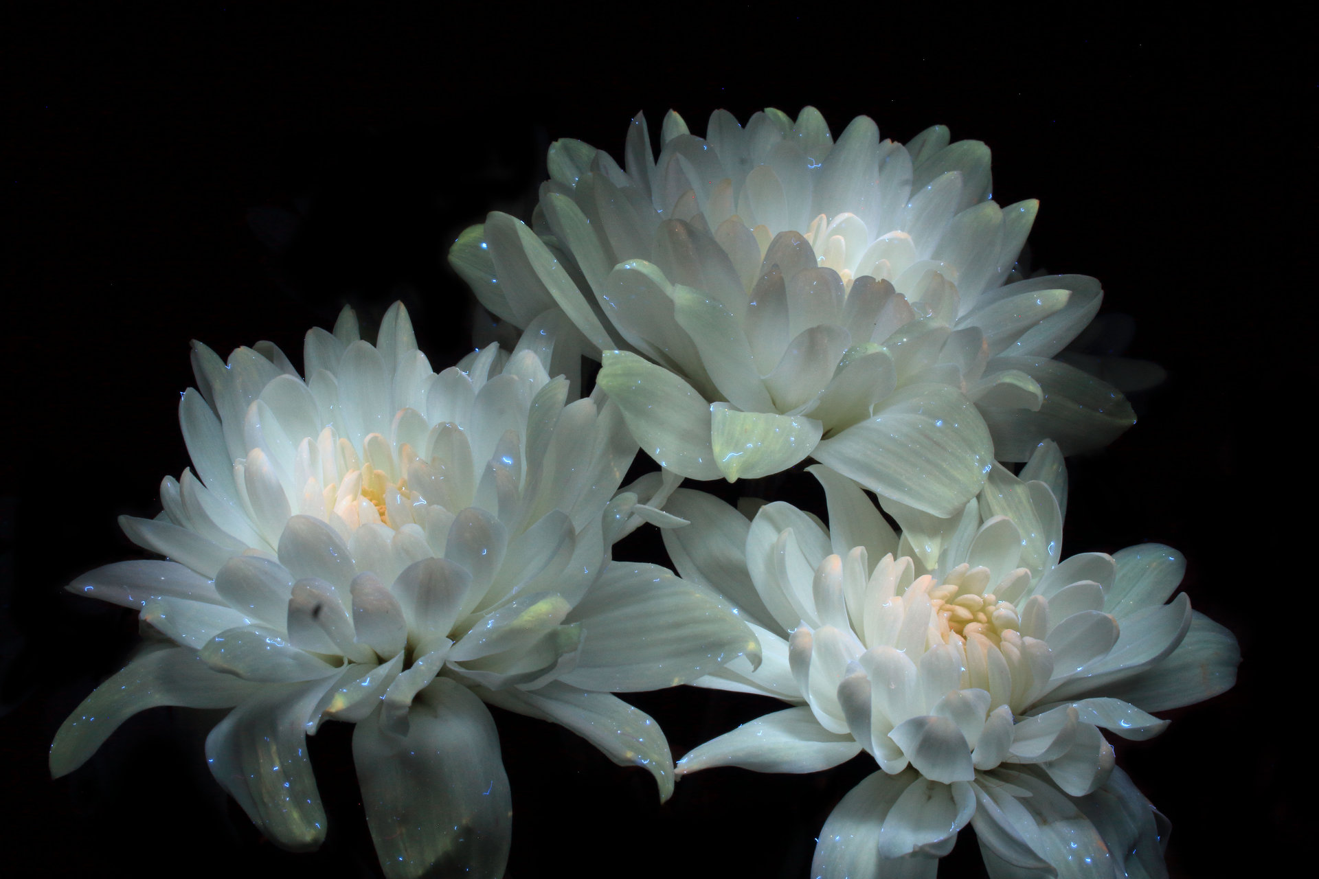 Магически цветя от Tanya Ivanova - Witchy